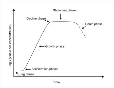 typical_growth_curve_002 microbial growth